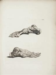 ALBINUS, Bernhard Siegfried (1