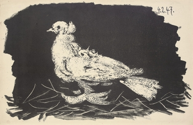 Pigeon blanc Fond noir (Bloch