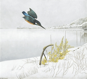 Eisvogel in Winterlandschaft,