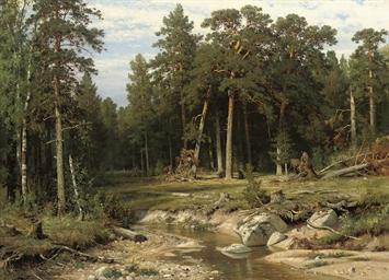 Mast Pine Forest in Viatka Pro