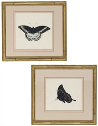 Two studies of butterflies