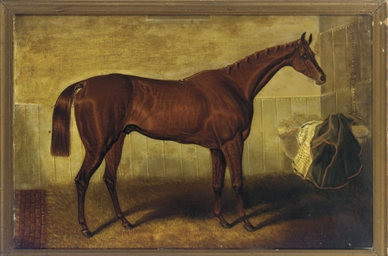 A bay racehorse in a stable