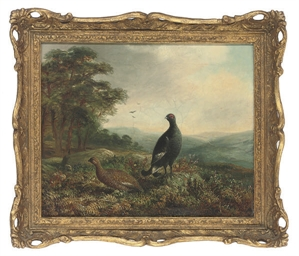 A black grouse and hen in an e