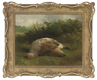 A dead partridge