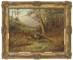 Pheasants in bracken, autumn