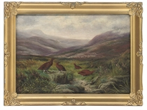 Grouse in a highland landscape