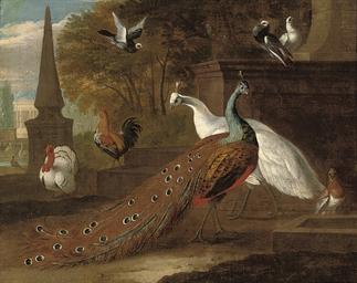 A peacock, a peahen, a turkey,