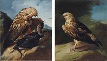 A buzzard attacking a cormorant in a landscape; and A buzzard in a landscape