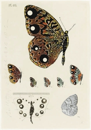 Butterfly; and Button from Alb