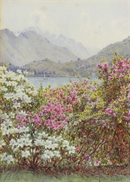 Rhododendrons, Lake Como; And