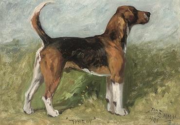 Tomboy, a beagle in a landscap