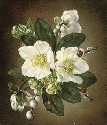Helibores, Christmas roses
