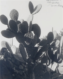 Man Ray in Cactus Garden, Pasa