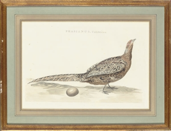 [Nesting birds]: Four Plates