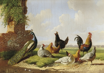 A peacock, rooster and hens in