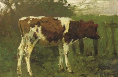 The calf - a study