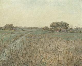 A wild meadow