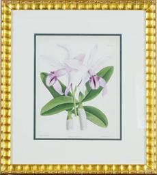 [Orchids]: Nine Plates