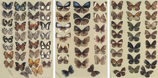 Twenty-three butterflies, in t