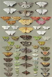 Sixty-three moths, arranged in