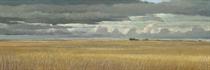 Kansas Wheat Fields