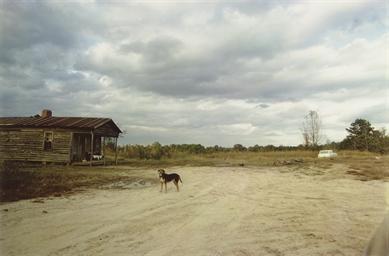 Near extinct Wannalaw Plantati