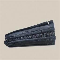 An Ichthyosaur Rostrum