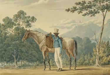 Portrait of a grey stallion wi