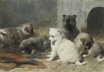 Sweet pups