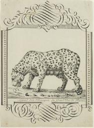 Un léopard vu de profil vers l