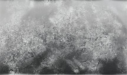 Untitled (Snake Powder), 2005