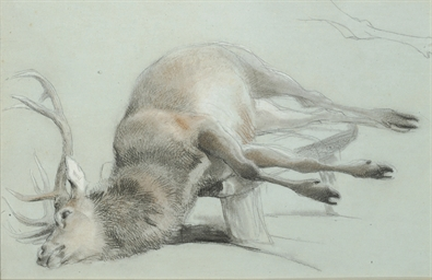 Study of a stag with a subsidi
