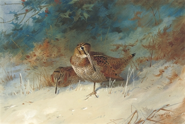 Woodcock in a winter landscape