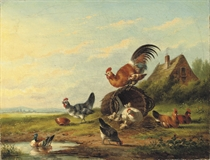 Chickens in a meadow