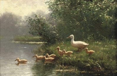 Mother duck and her ducklings