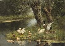 A duck family near the pond