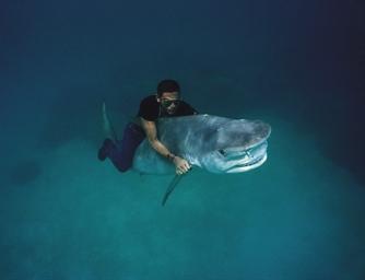 Shark Riding, 1992