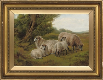 Ewes and lambs grazing in the