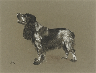 A cocker spaniel awaiting a tr