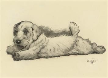 A sealyham puppy stretching