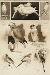 Studies of pet birds