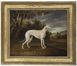 Waggoner, a greyhound, in a la