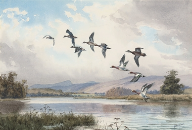 A company of widgeon at Invers