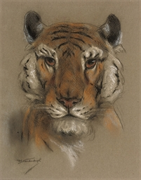 A head of a tiger (illustrated