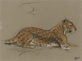 Study of a leopard with a deta