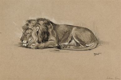 Study of a sleeping Indian lio