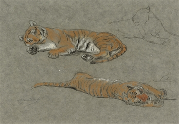 Study of two tigers lying down