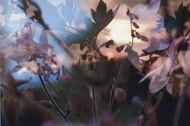 Ohne Titel (Blumenbild), 1998