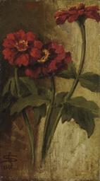 Zinnie rosse, 1881