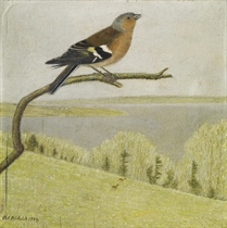 Buchfink auf kahlem Ast, 1954